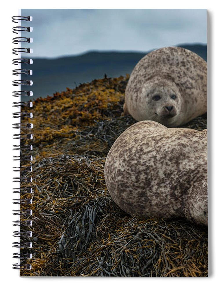 Seaweed Spiral Notebook featuring the photograph Common Seals, Loch Dunvegan, Isle Of by Diane Macdonald
