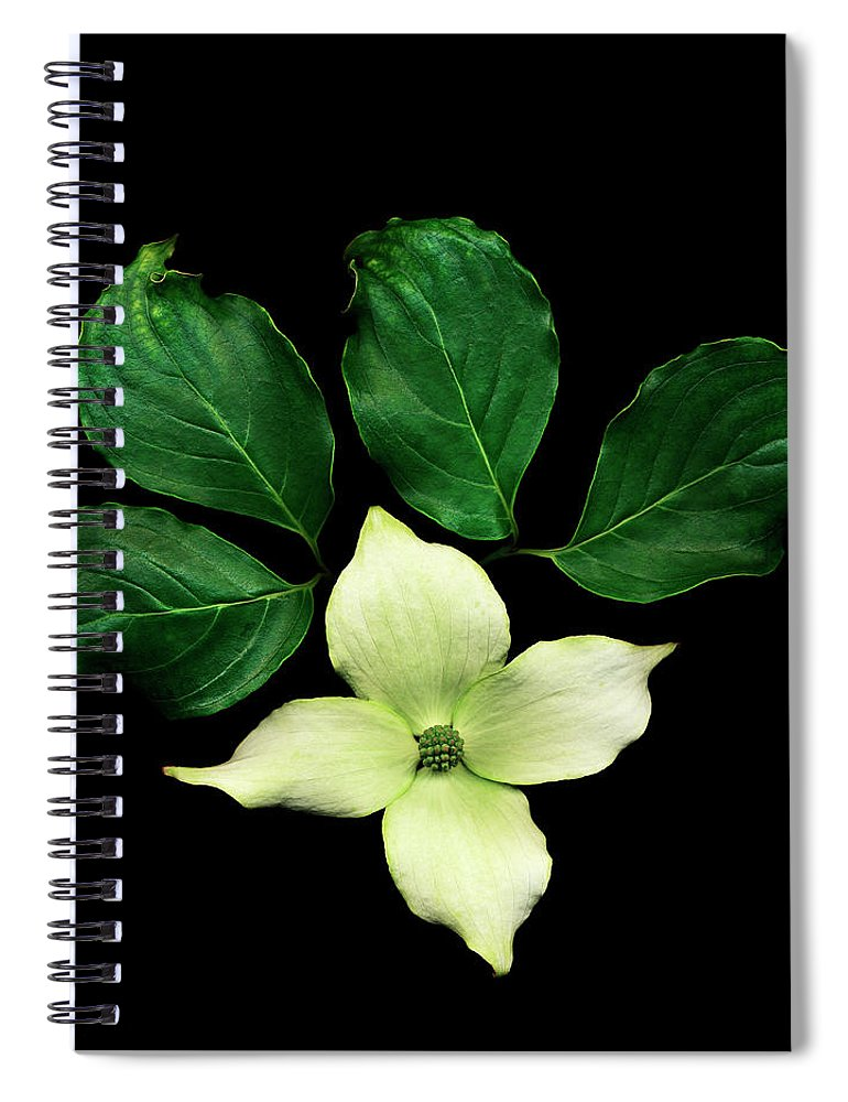 Dogwood Spiral Notebook featuring the photograph Cornus Plant Against Black Background by Mike Hill