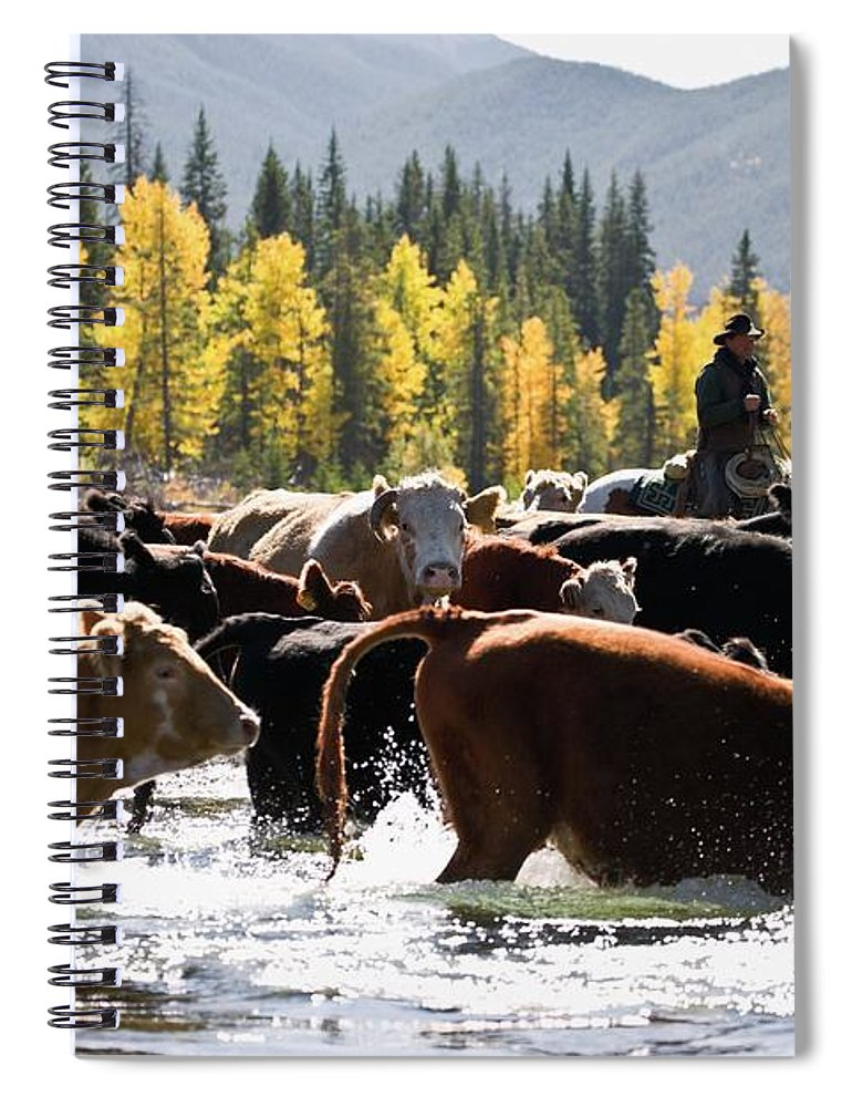 People Spiral Notebook featuring the photograph Cowboy Herding Cattle Across River by Design Pics/carson Ganci
