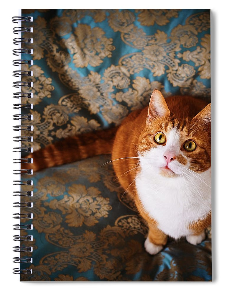 Pets Spiral Notebook featuring the photograph Cute Cat Named Nisse by Knape