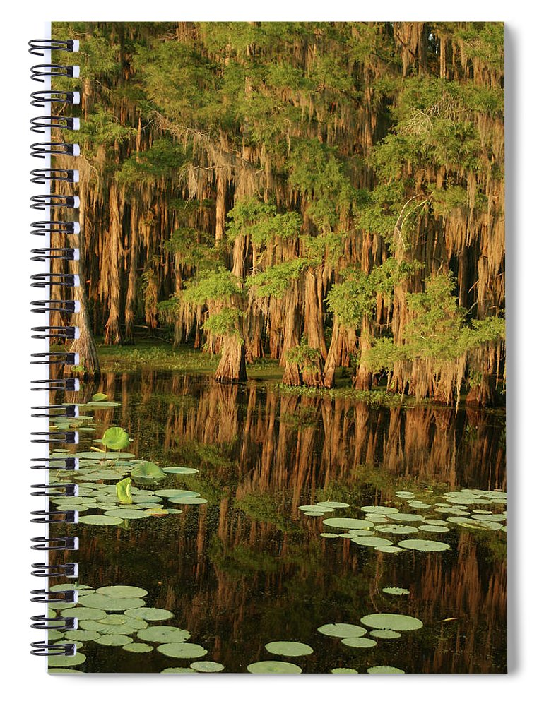Outdoors Spiral Notebook featuring the photograph Cypress In The Lake by Jlfcapture