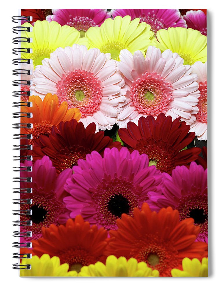 Large Group Of Objects Spiral Notebook featuring the photograph Daisies by Lumina Imaging