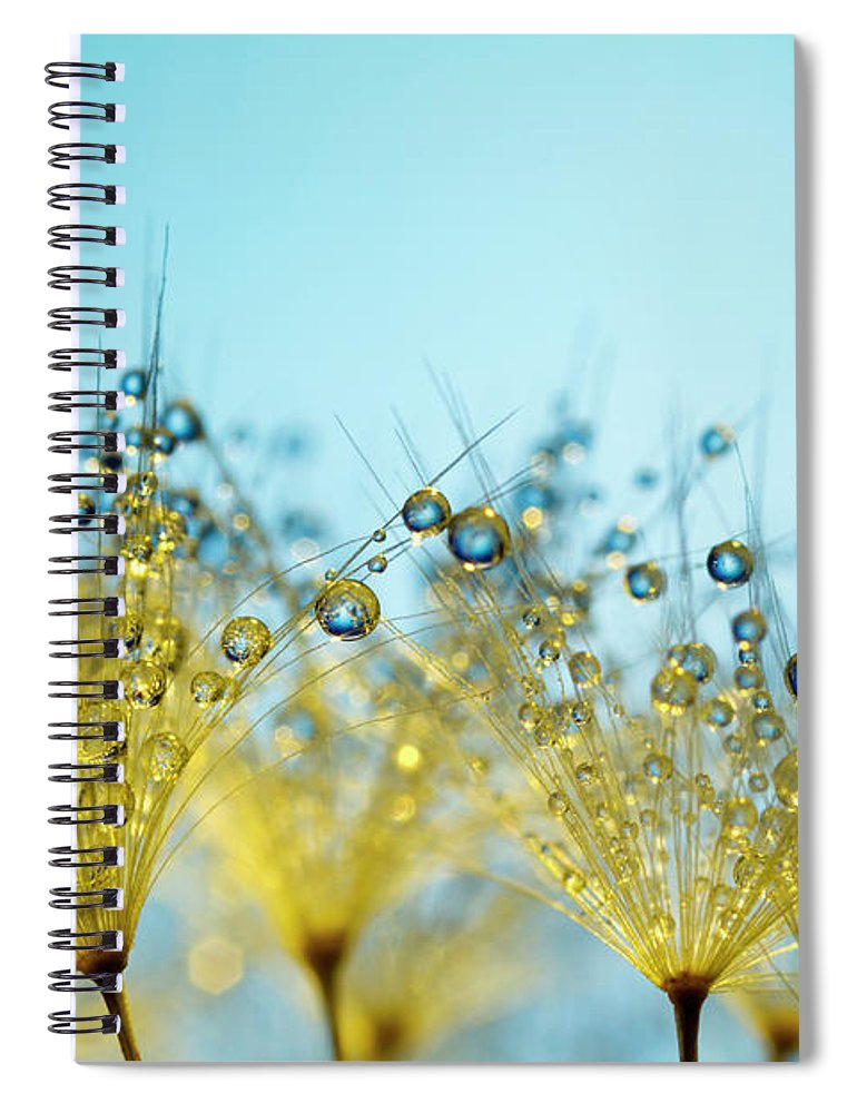 Yellow Spiral Notebook featuring the photograph Dandelion And Dew - Gold Abstract Macro by Thomasvogel