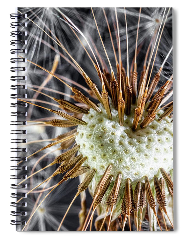 Dandelion Spiral Notebook featuring the photograph Dandelion Seed Pod by Tom Mc Nemar