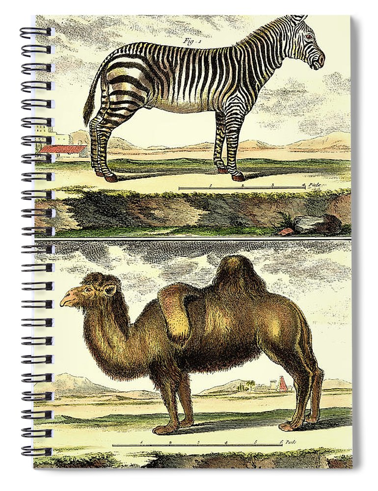Safari Spiral Notebook featuring the painting Diderots Zebra And Camel by Denis Diderot