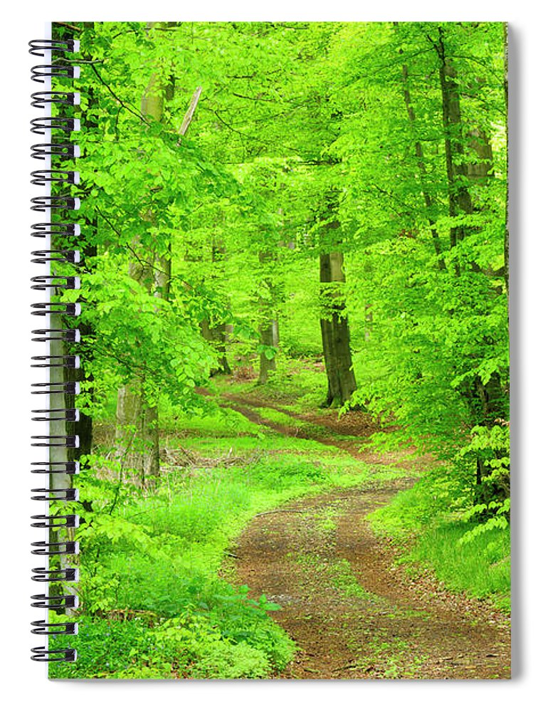 Environmental Conservation Spiral Notebook featuring the photograph Dirt Road Through Lush Beech Tree by Avtg