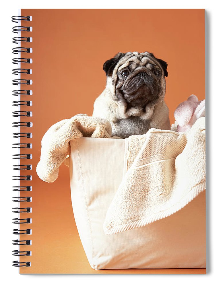 Pets Spiral Notebook featuring the photograph Dog In Basket by Chris Amaral