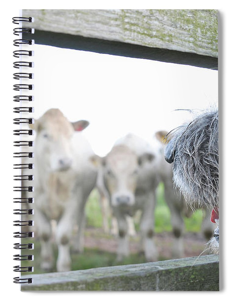 Alertness Spiral Notebook featuring the photograph Dog Watching Cows Through Fence by Cecilia Cartner