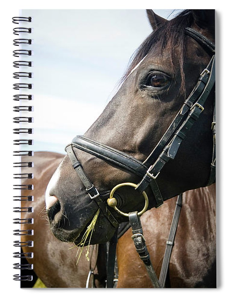 Horse Spiral Notebook featuring the photograph Dont Look Back by Pixalot