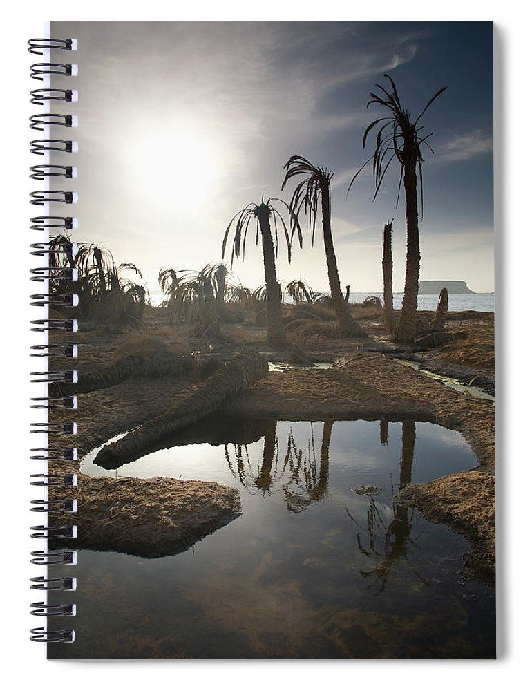 Scenics Spiral Notebook featuring the photograph Dried Up Palm Trees And Salt Water On by Sean White / Design Pics