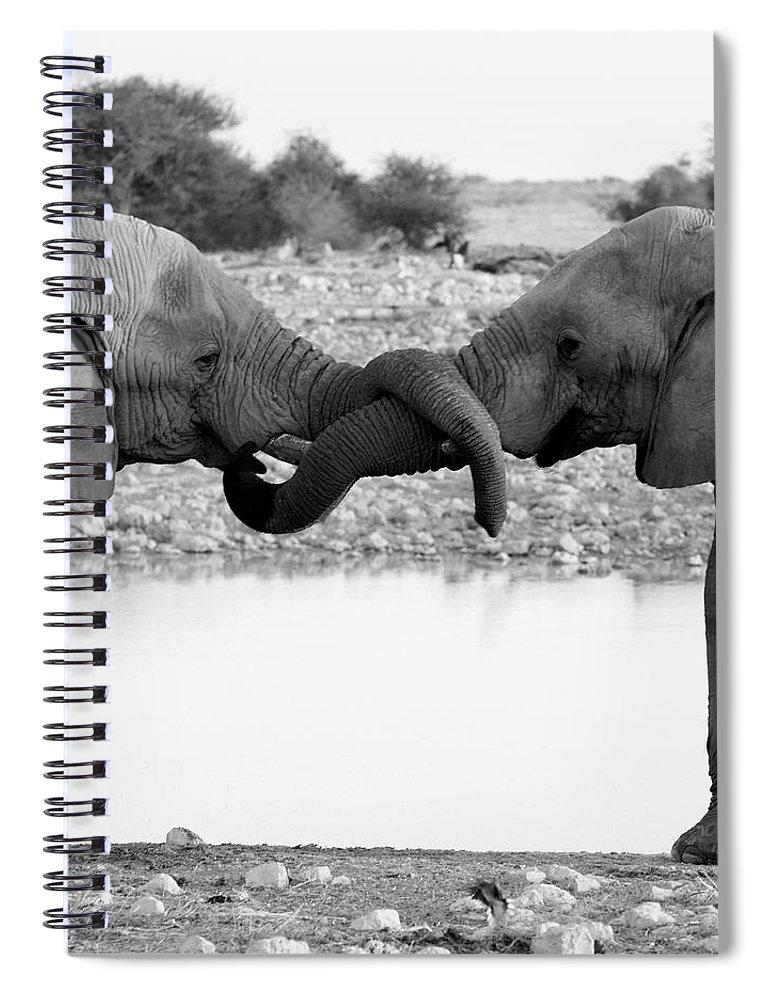 Animal Trunk Spiral Notebook featuring the photograph Elephants Curling Trunk by Harrykolenbrander