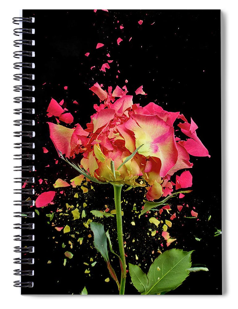 Black Background Spiral Notebook featuring the photograph Exploding Rose by Don Farrall