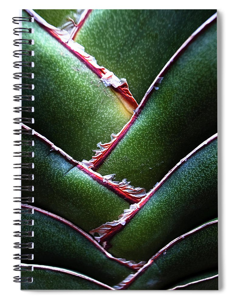 Natural Pattern Spiral Notebook featuring the photograph Fan Leave Succulent Plant by Tontygammy + Images