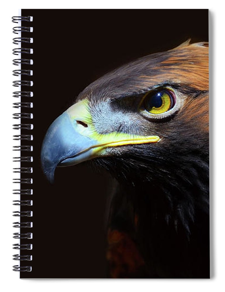 Animal Themes Spiral Notebook featuring the photograph Female Golden Eagle by A L Christensen