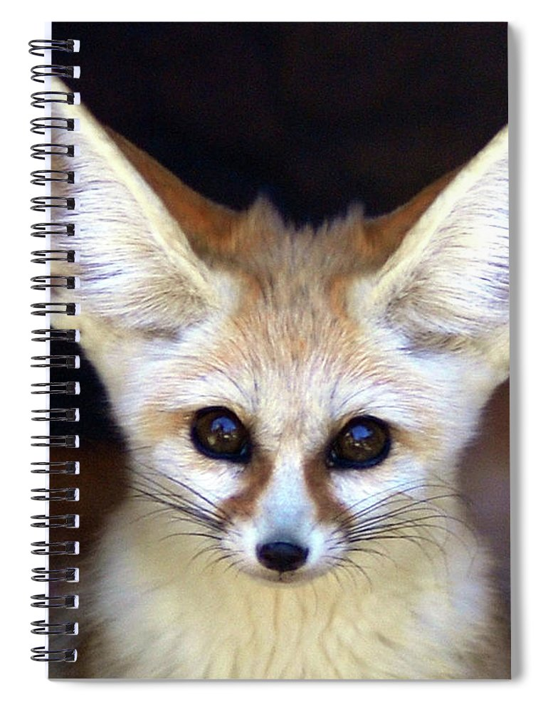 Alertness Spiral Notebook featuring the photograph Fennec Fox by Floridapfe From S.korea Kim In Cherl