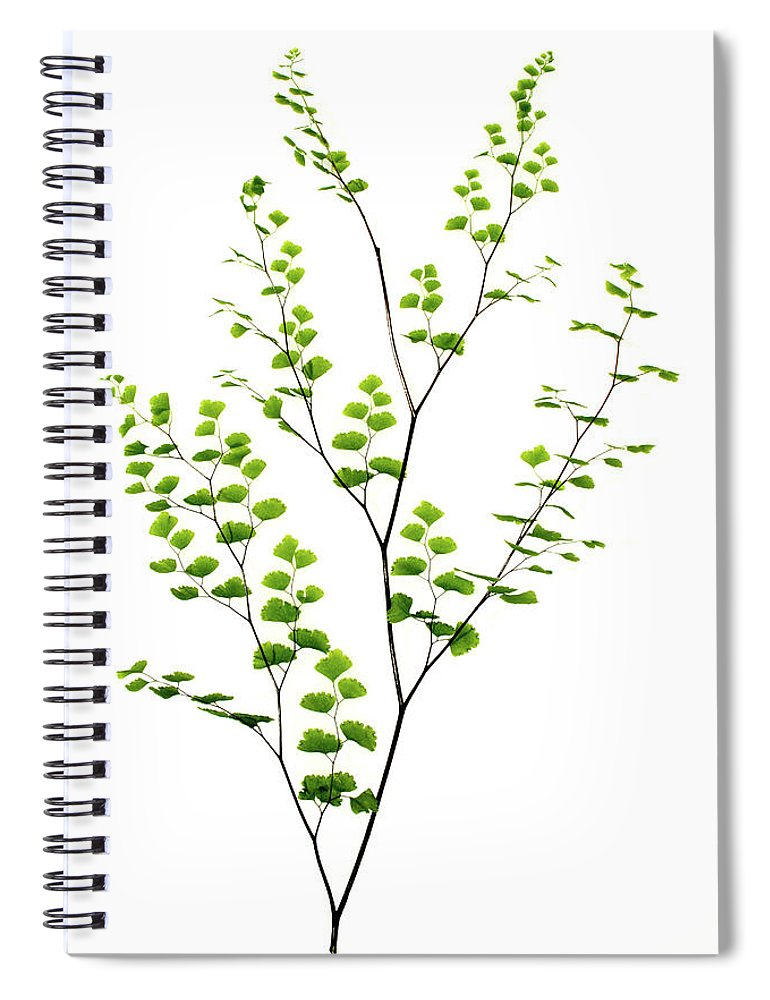 Ginkgo Tree Spiral Notebook featuring the photograph Fern, Maidenhair by Claylib
