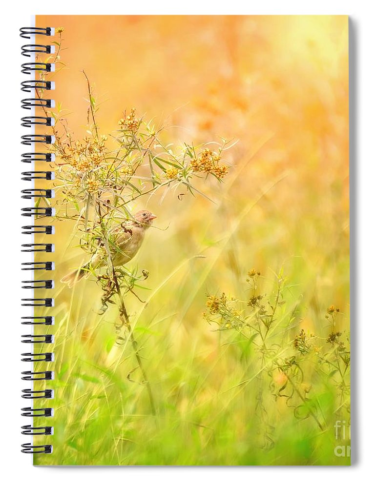 Aves Spiral Notebook featuring the photograph Field Sparrow by Heather Hubbard