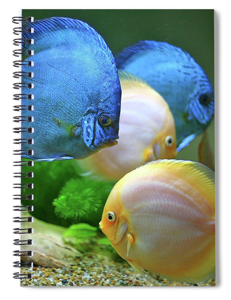 Underwater Spiral Notebook featuring the photograph Fish In Water by Vietnam