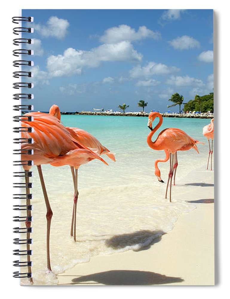 Shadow Spiral Notebook featuring the photograph Flamingos On The Beach by Vanwyckexpress