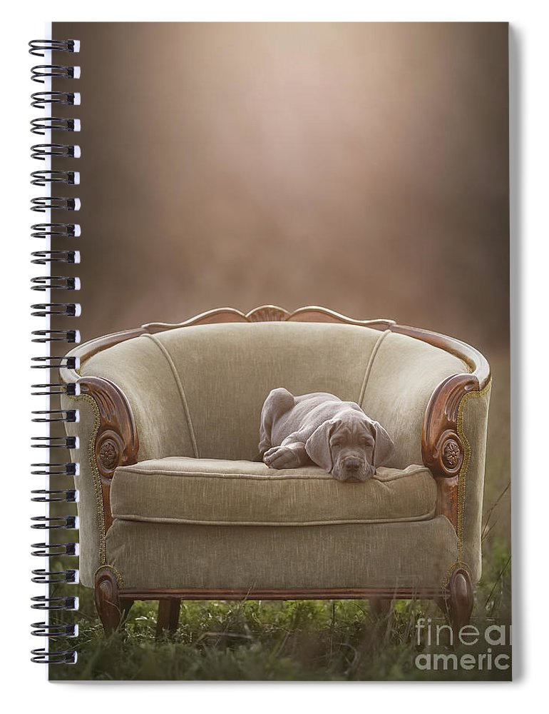 Sofa Spiral Notebook featuring the photograph Floyd by Mike Bons