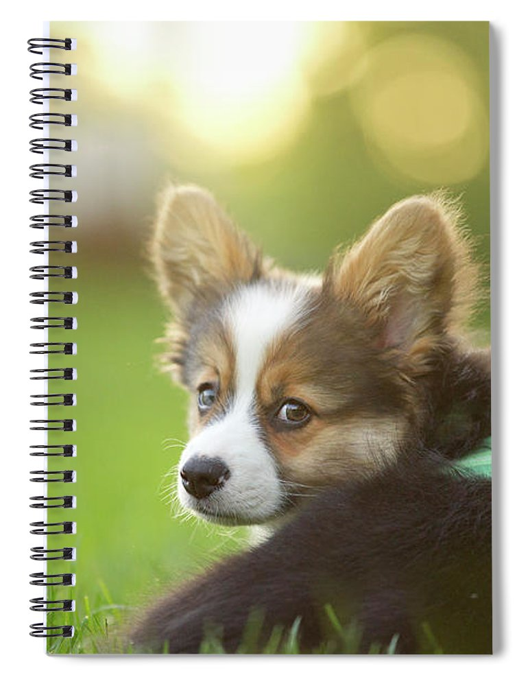 Pets Spiral Notebook featuring the photograph Fluffy Corgi Puppy Looks Back by Holly Hildreth