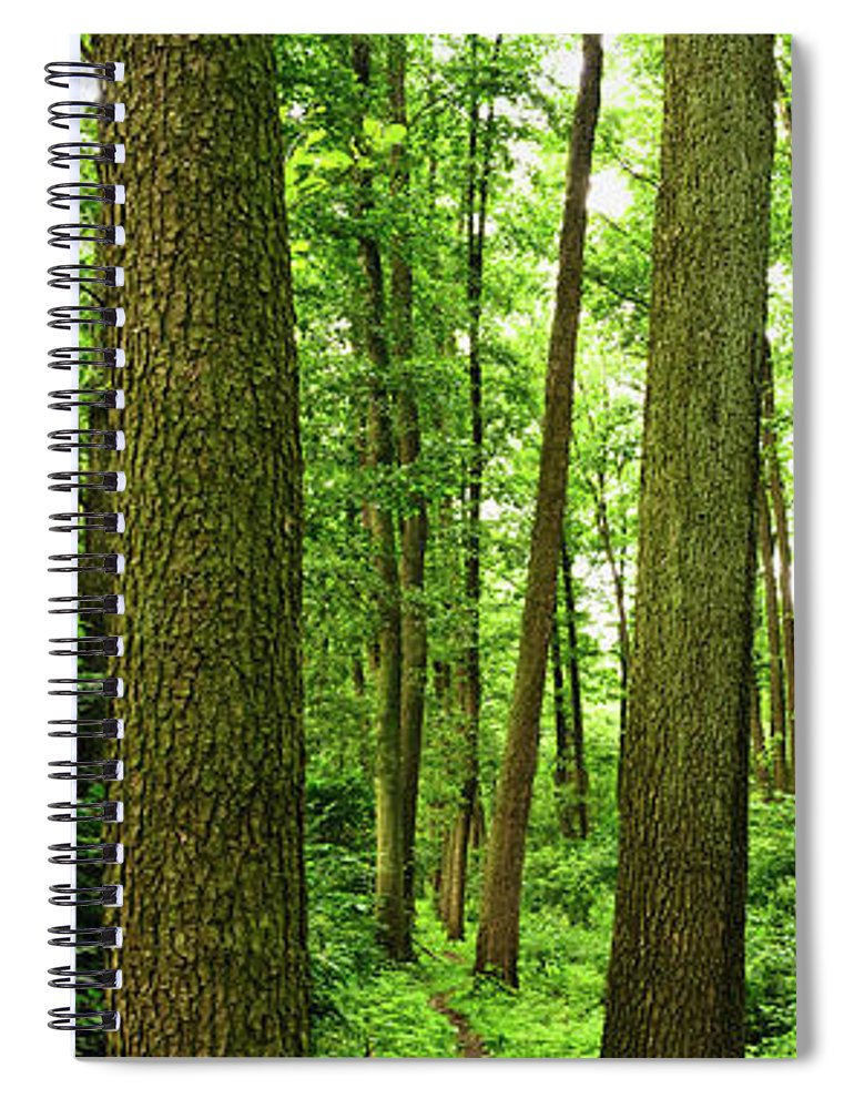 Scenics Spiral Notebook featuring the photograph Footpath Between The Trees by Tomchat