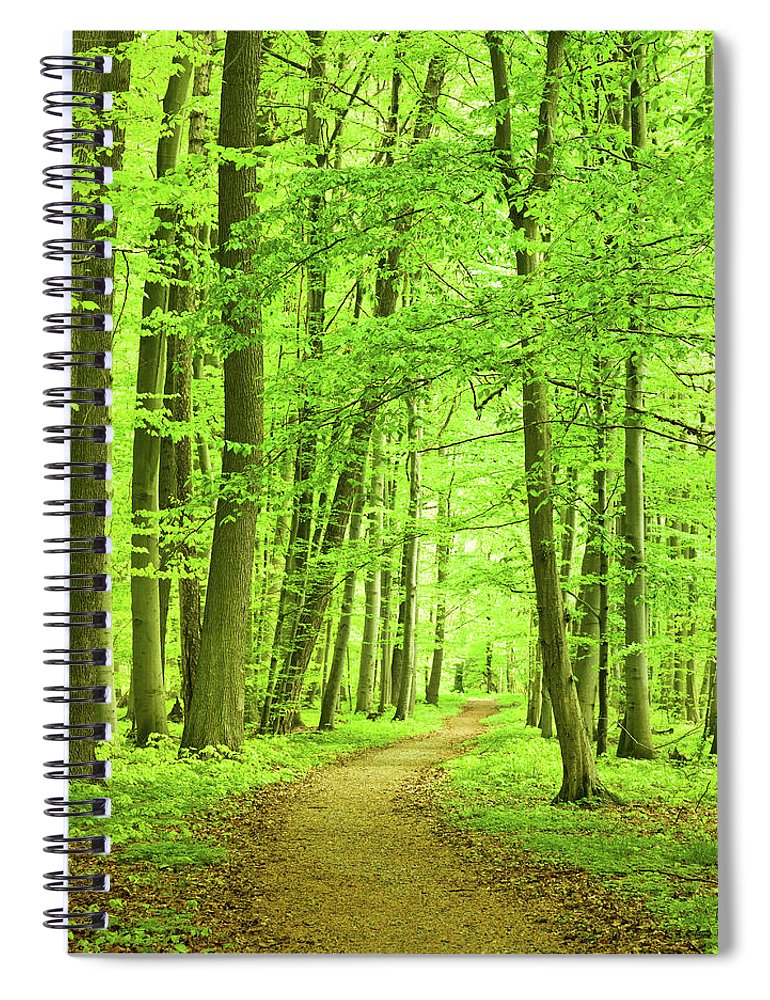 Curve Spiral Notebook featuring the photograph Forest Path by Nikada