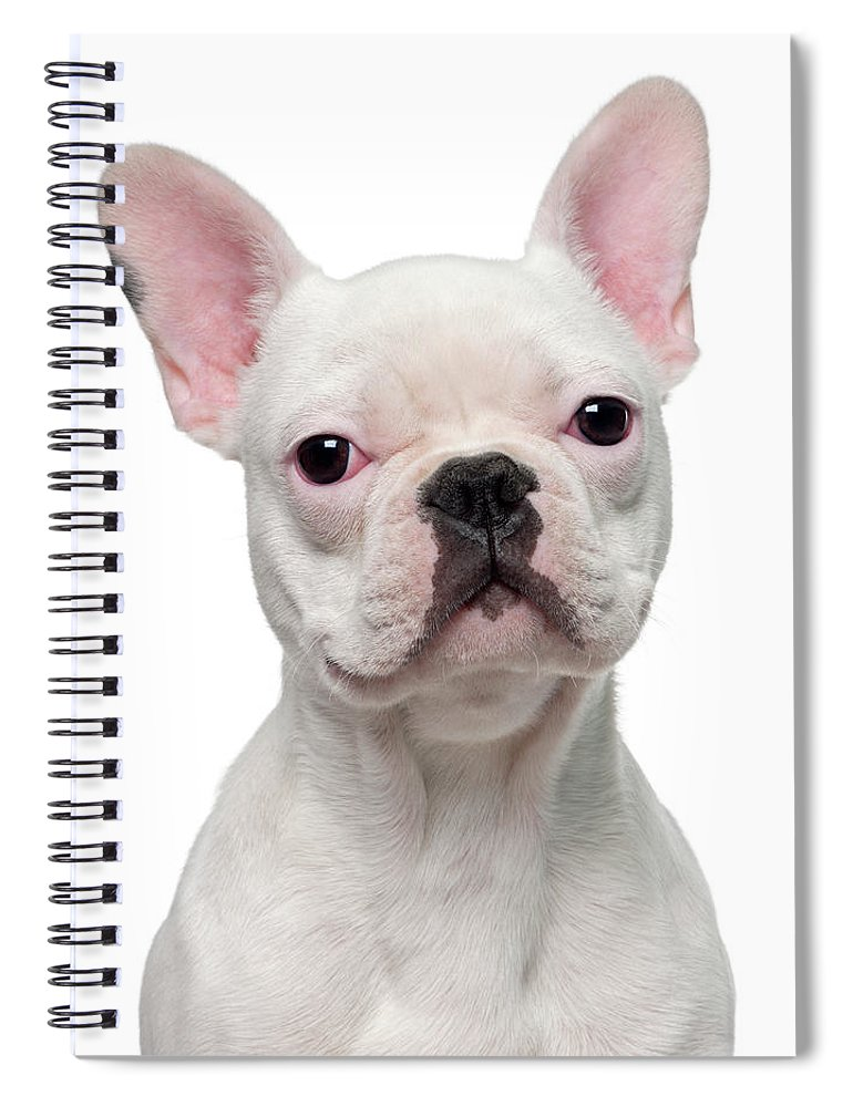 Pets Spiral Notebook featuring the photograph French Bulldog Puppy 5 Months Old by Life On White