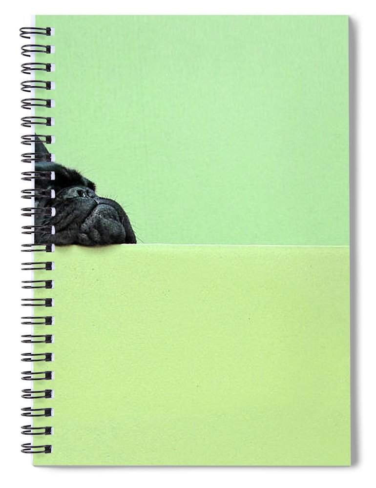Pets Spiral Notebook featuring the photograph French Bulldog Puppy by Retales Botijero