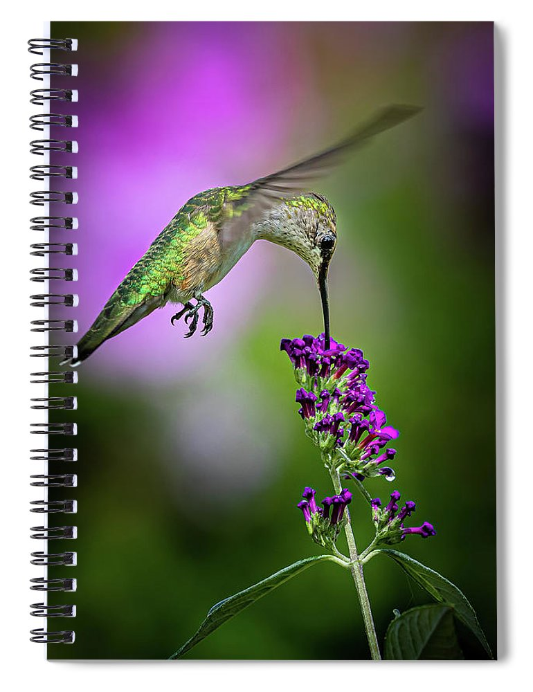 Hummingbird Spiral Notebook featuring the photograph From The Top by Allin Sorenson