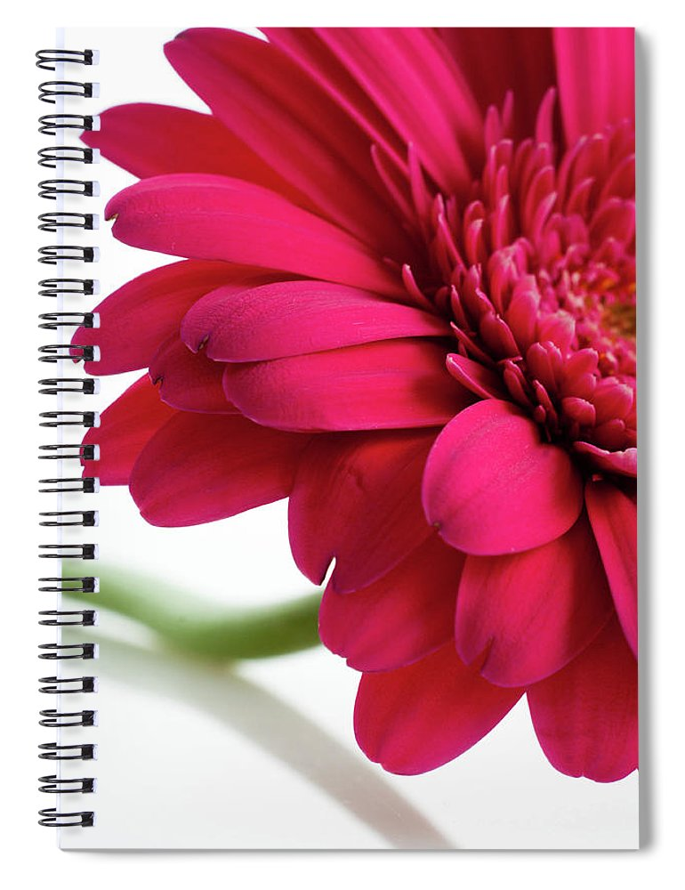 Flowerbed Spiral Notebook featuring the photograph Gerbera Daisy by Subman