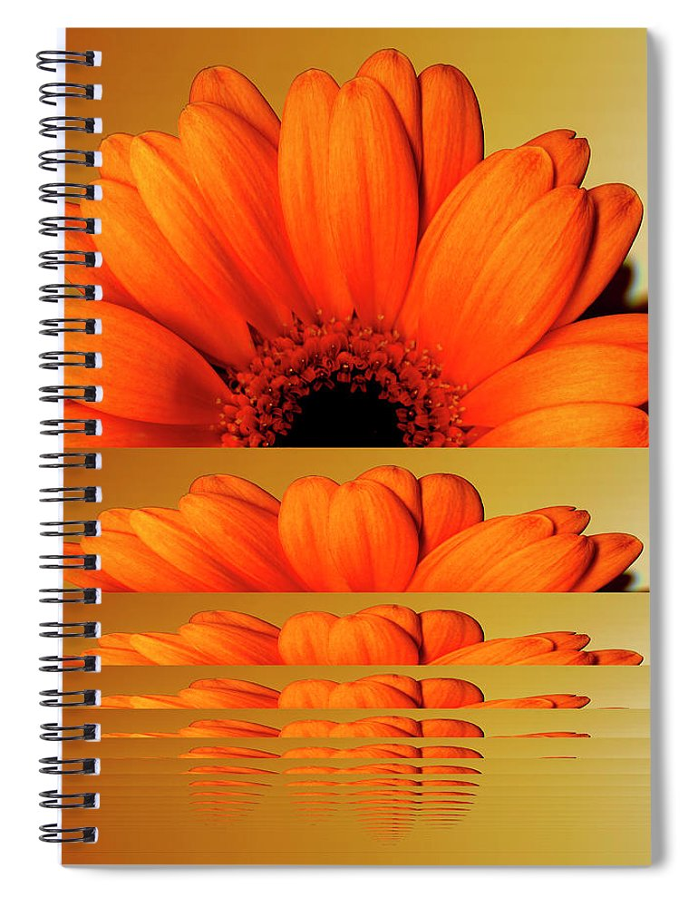 Orange Color Spiral Notebook featuring the digital art Gerbera Flower As Rising Sun by Eversofine