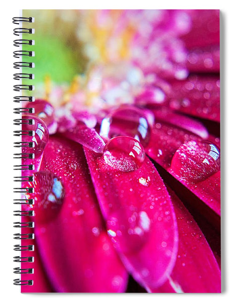 Petal Spiral Notebook featuring the photograph Gerbera Rain Droplets by Michelle Mcmahon