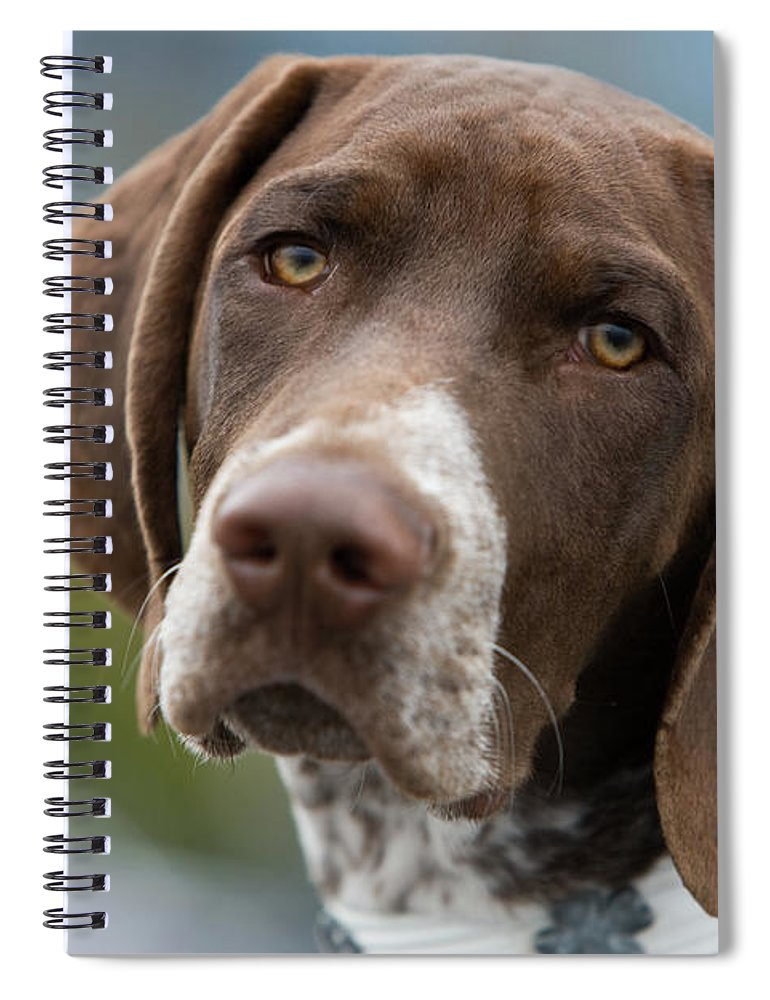 Pets Spiral Notebook featuring the photograph German Shorthair Pointer With Building by Markhatfield