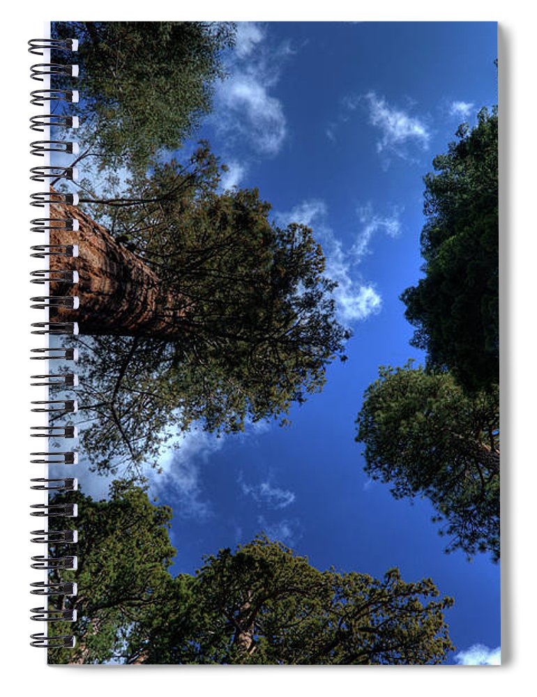 Sequoia Tree Spiral Notebook featuring the photograph Giant Sequoias - 2 by Rhyman007