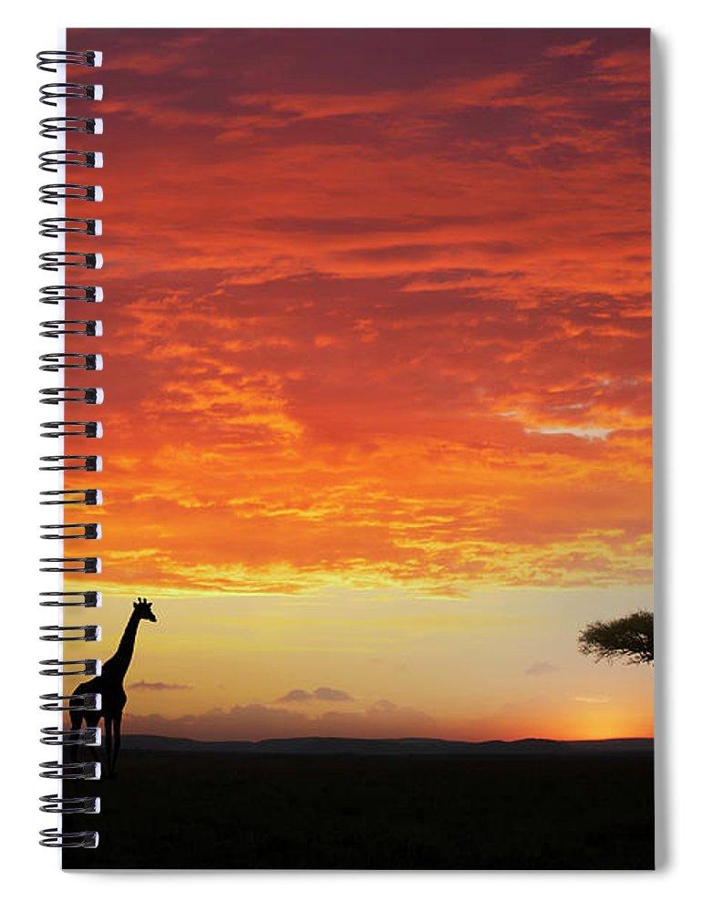 Kenya Spiral Notebook featuring the photograph Giraffe And Acacia Tree At Sunset by Buena Vista Images