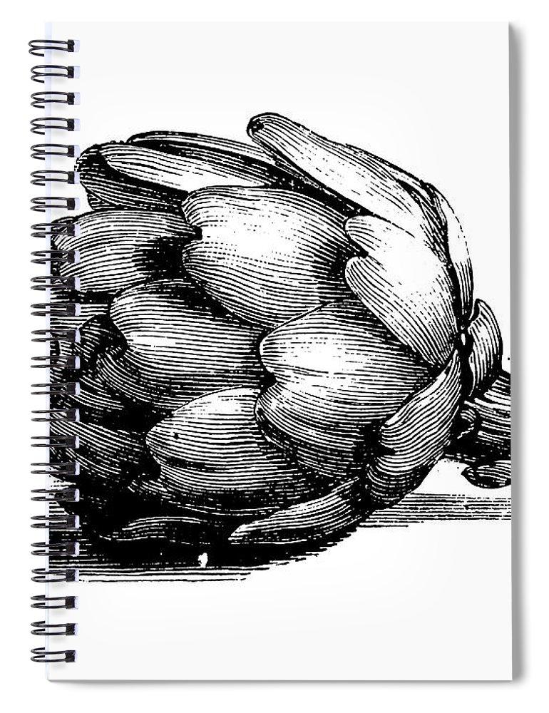 Italian Food Spiral Notebook featuring the digital art Globe Artichoke | Antique Culinary by Nicoolay