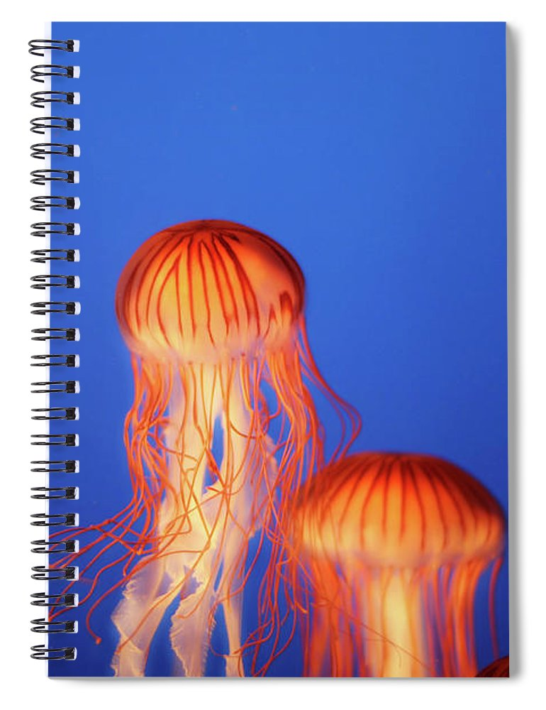 Underwater Spiral Notebook featuring the photograph Glowing Jellyfish Under Water by Indy Randhawa