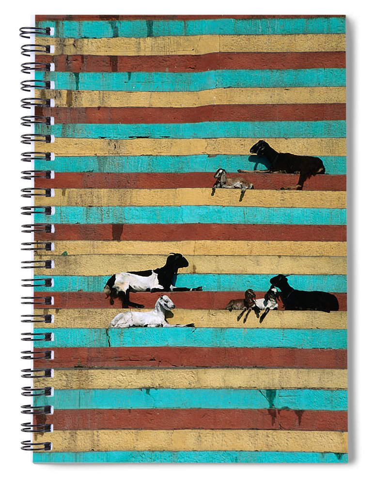 Steps Spiral Notebook featuring the photograph Goats Resting On The Tulsi Ghats by Anders Blomqvist