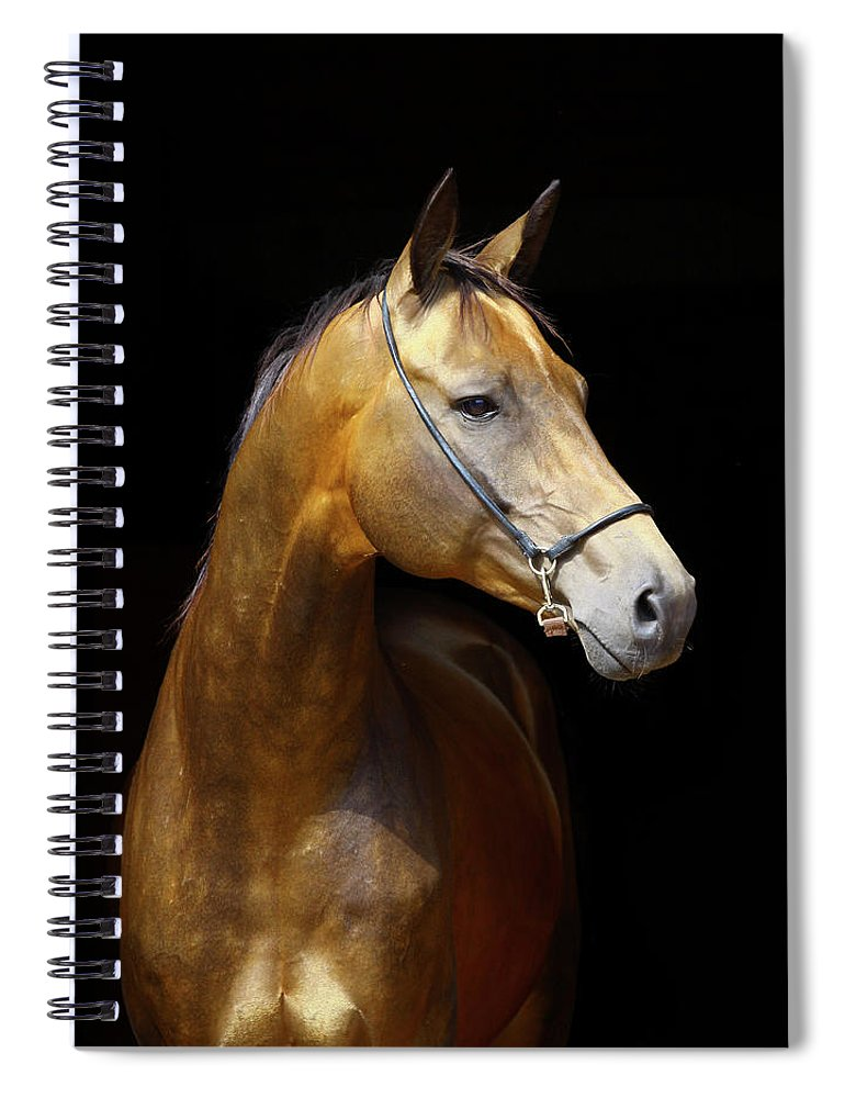 Horse Spiral Notebook featuring the photograph Golden Horse by Photographs By Maria Itina