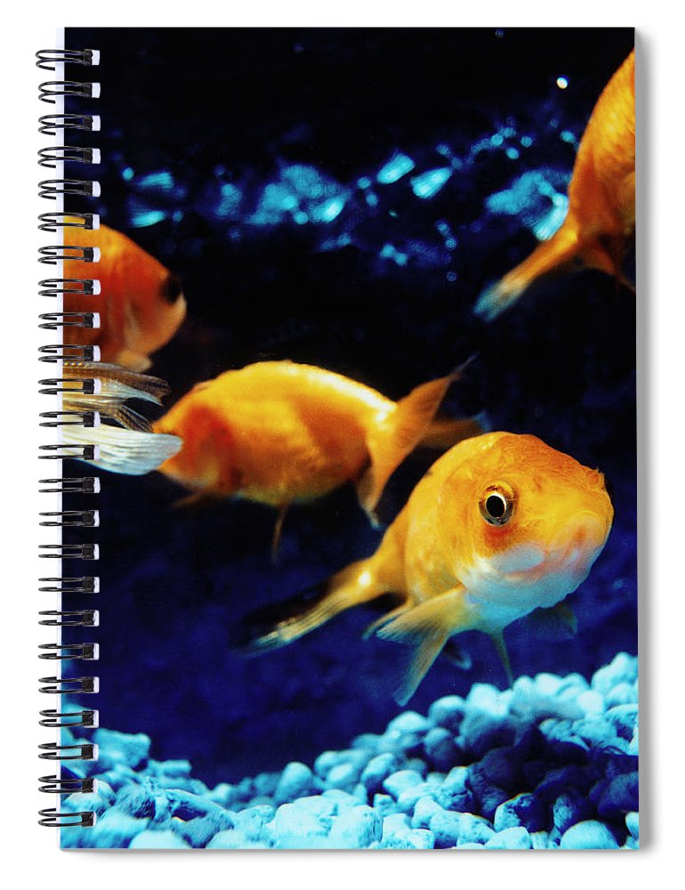 Pets Spiral Notebook featuring the photograph Goldfish In Fish Tank by Silvia Otte