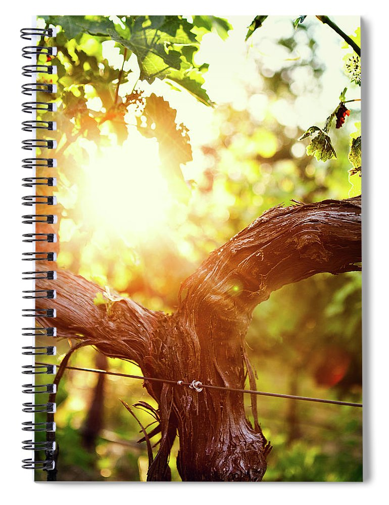 Dawn Spiral Notebook featuring the photograph Grape Vine And Trunk In Late Spring by Ryanjlane