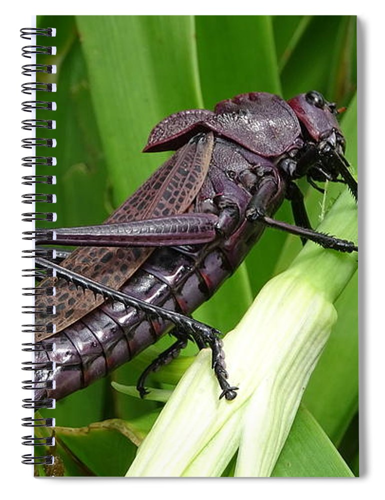 Spiral Notebook featuring the photograph Grasshopper by Stanley Vreedeveld