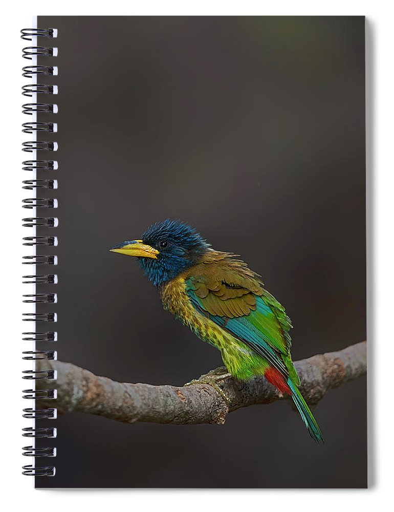 Bird Images For Print Spiral Notebook featuring the photograph Great Barbet by Uma Ganesh