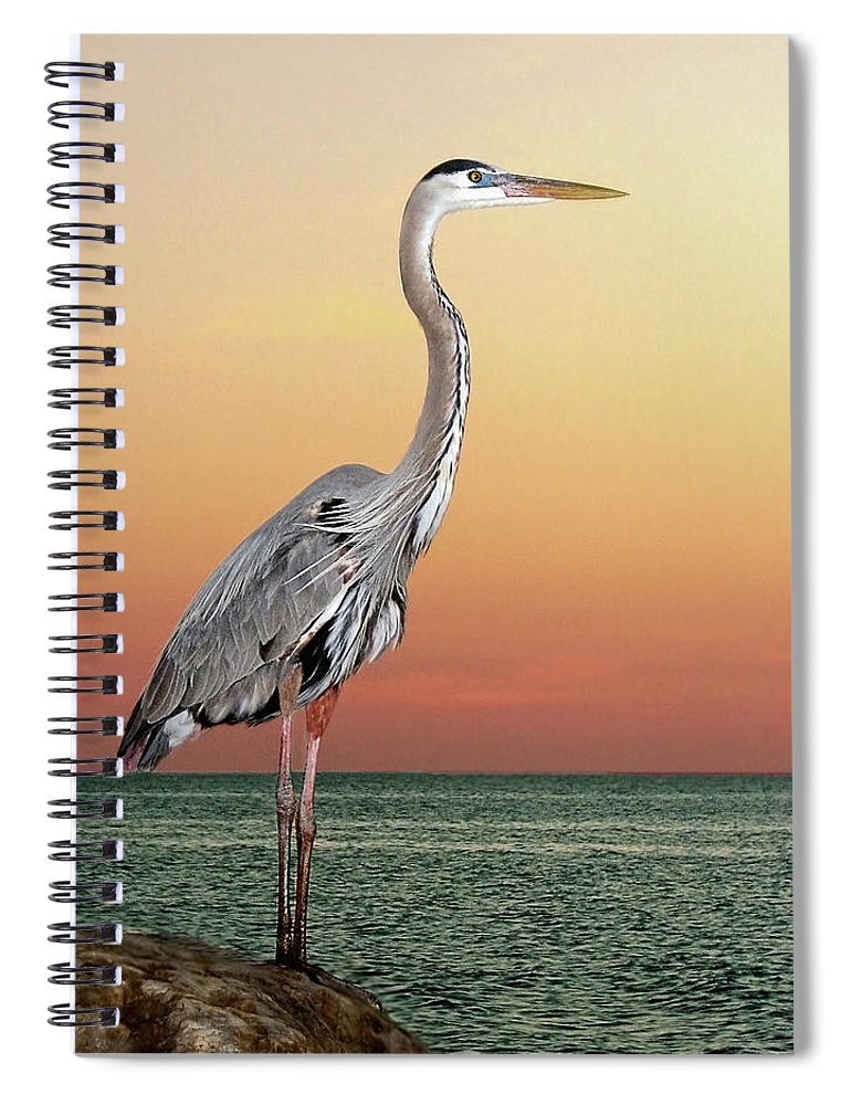 Scenics Spiral Notebook featuring the photograph Great Blue Heron In Seaside Sunset by Melinda Moore