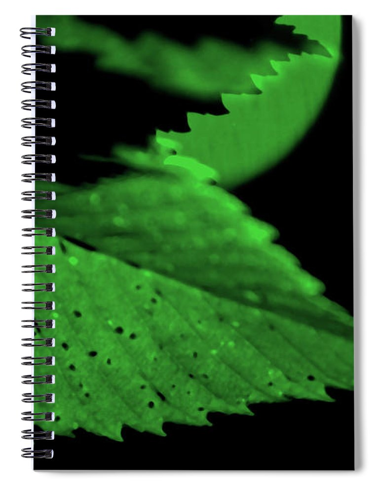 Leaf Spiral Notebook featuring the photograph Green Leaf in Sun by Lonnie Paulson