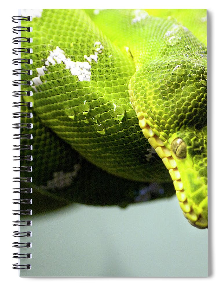 Toronto Spiral Notebook featuring the photograph Green Snake Curled And Resting by Gail Shotlander