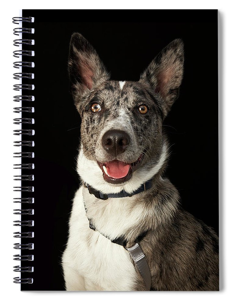 Pets Spiral Notebook featuring the photograph Grey And White Australian Shepherd With by M Photo