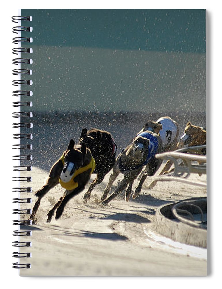 Dust Spiral Notebook featuring the photograph Greyounds 3 Of 7 by Dplight