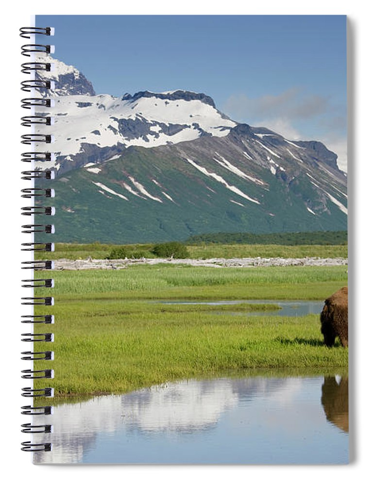 Brown Bear Spiral Notebook featuring the photograph Grizzly Bear, Katmai National Park by Paul Souders